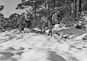 """""""Vinter"""" Foto: Tor Resser"""